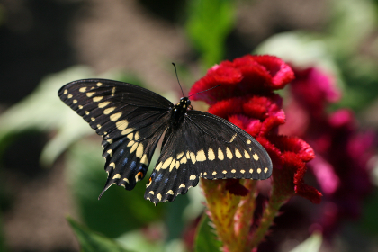 free photo of butterfly   close up