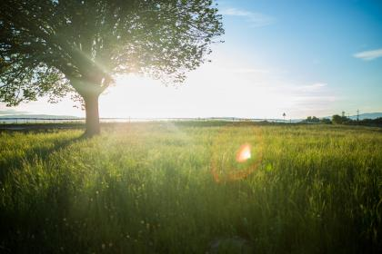 tree, field, nature, grass, plants, sun rays, sunset, sunrise, sky, clouds, landscape