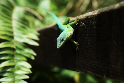 animals, reptiles, lizard, gecko, tree, bark, tree, wood, leaves, ferns, cute, adorable, green, still, bokeh