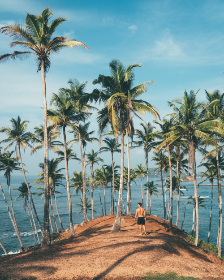 man,  island,  palm tree,  tree,  naturee,  sand,  beach,  sea,  ocean,  blue sky,  travel,  vacation,  holiday