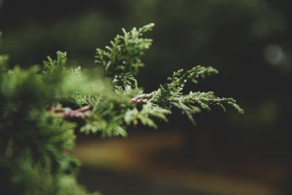 nature, trees, branches, leaves, bokeh