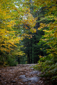 autumn,  woods,  nature,  forest,  hike,  trees,  fall,  foliage,  colorful,  path,  peaceful,  adventure,  outdoors,  leaves