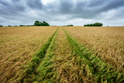 tractor,  field,  tracks,  landscape,  horizon,  farm,  farming,  agriculture,  grass,  hay,  sky,  clouds,  nature,  land