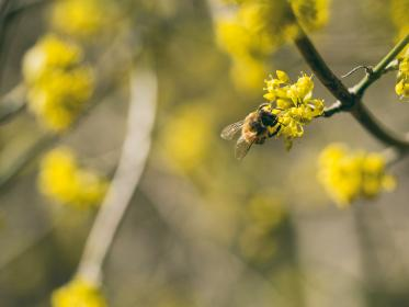 flower, yellow, petal, bloom, garden, plant, nature, autumn, fall, bee, insect