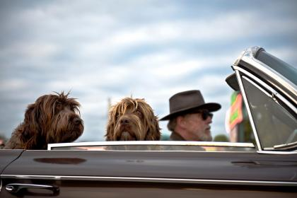 land, vehicle, car, travel, road, trip, transportation, people, old, man, driving, dog, puppy, pet, friends