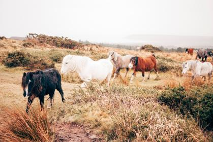horse, animal, brown, grassland, green, grass, trees, plants, hoard, white