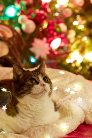 cat,  christmas,  pet,  animal,  tree,  holiday,  feline,  festive,  looking,  napping,  colorful,  lights,  xmas,  seasonal,  domestic,  indoors