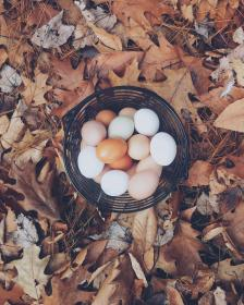 basket, eggs, easter, outdoor, leaf, fall, autumn