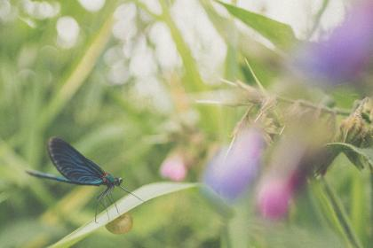 free photo of butterfly  flower