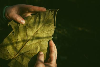 leaves, green, plant, people, hand