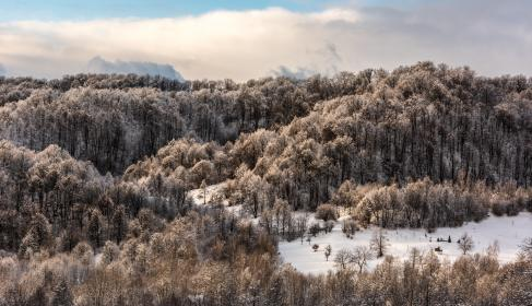 nature, landscape, clouds, sky, trees, forest, woods, snow, winter, cold, weather