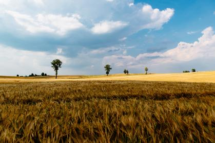 green, grass, crops, agriculture, farm, field, outdoor, tree, plants, view, clouds, blue, sky, nature