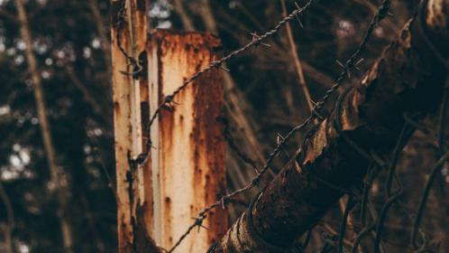 tree, wood, thorn, barbed, wire, fence, outdoor