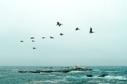 green,  ocean,  sky,  pelicans,  flying,  birds,  rocks,  peace,  nature,  animal,  life, horizon, water, flock