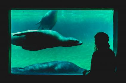 underwater, aquarium, sea lion, water, man, guy, people, swim, sea