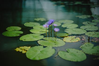 green, leaves, plant, violet, flower, autumn, fall, nature, river, lake