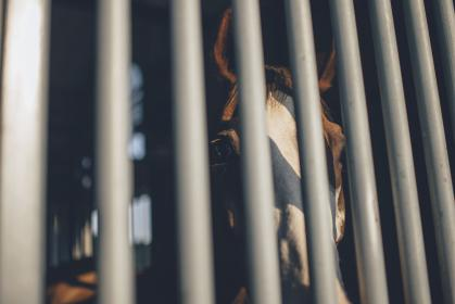 horse, bars, snout, animal, brown
