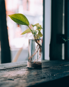 vase,  plant,  window,  leaf,  glass,  fresh,  room,  interior,  decoration,  daytime,  flowerpot,  decorative,  green, home, decor