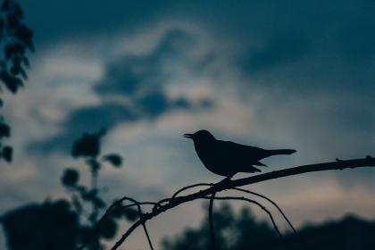 animals, birds, perched, trees, branches, dusk, dawn, shadows, silhouette