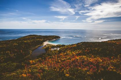 trees, plants, forest, aerial, view, fall, autumn, sea, ocean, coast, blue, water, waves, horizon, sky, clouds