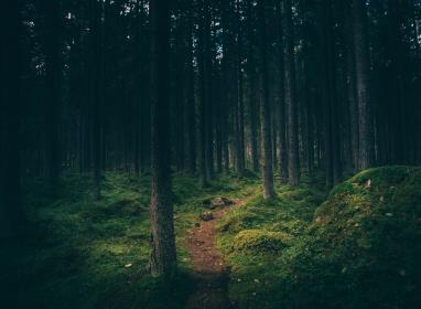 plants, trees, forest, pine, trunk, leaves, green, sky, clouds, soil, land, road