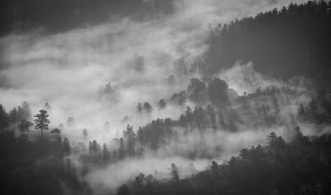 nature, trees, forest, fog, smoke, black, white, grayscale, black and white