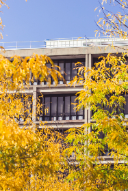 city,  autumn,  building,  facade,  fall,  	office,   windows,   exterior,   modern,   business,   architecture,  tree,  branches