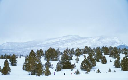 snow, winter, white, cold, weather, ice, trees, plants, nature, people, ski, jacket