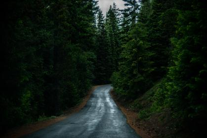 nature, roads, paths, streets, asphalt, forests, trees, zigzag