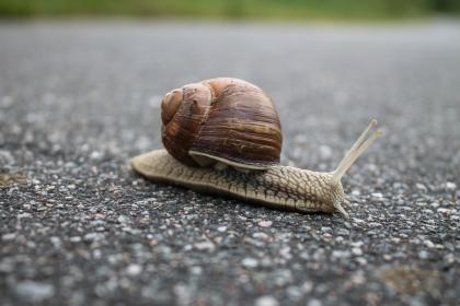 snail, nature, floor, rock, slow, shell