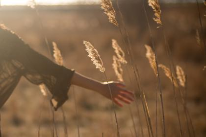 field, grass, yield, sunny, sunset, people, woman, hands
