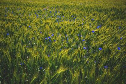 flowers, nature, blossoms, grass, bed, field, sway, green, purple