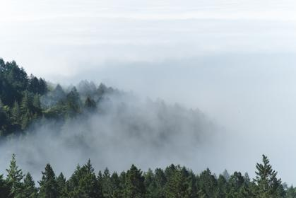 mountain, forest, trees, pine, clouds, fog, nature, green, white, sky, view