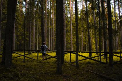 people, man, guy, male, alone, travel, outdoor, nature, backpack, fence, green, grass, tree, plant, forest