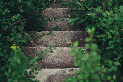 nature, plants, vines, paths, stairs, concrete, green, still, bokeh