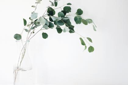 still, items, things, plants, vase, branches, leaves, minimalist, white, green