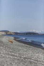 nature, water, ocean, sea ,beach, waves, current, clouds, sky, dog, puppy, animal, brown, rocks