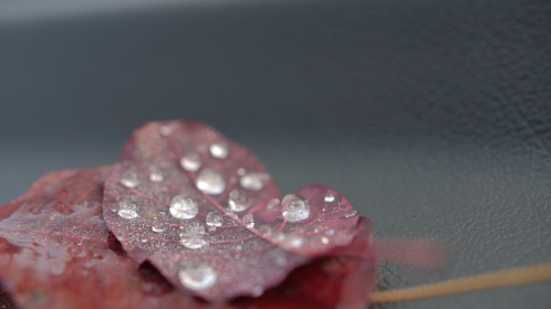 drops,  leaf, water, dew, red, nature