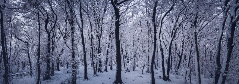 free photo of snow    forest