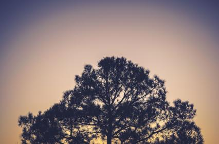 tree, silhouette, branches, nature