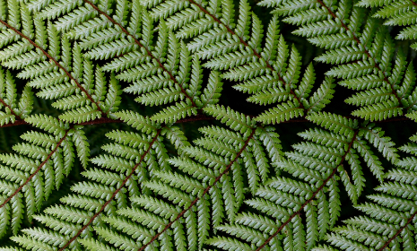 green,  ferns,  pattern,  texture,  rain,  water,  nature,  outdoors,  plants,  vegetation,  close up,  summer
