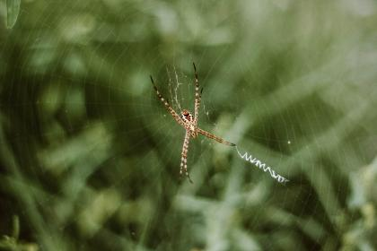 spider, web, outdoor, insect, blur