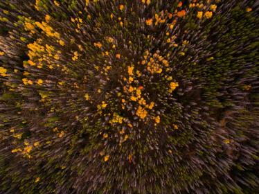 aerial, view, trees, plants, forest, nature, autumn, fall