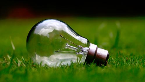 nature, green, grass, light, bulb, filaments