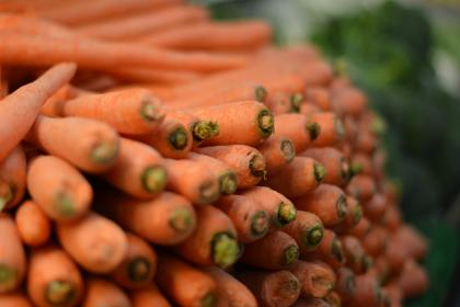 free photo of carrots  vegetables
