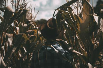 guy, man, male, people, back, contemplate, fashion, style, fedora, checkered, shirt, corn, stalk, field, sky, clouds, contemplate