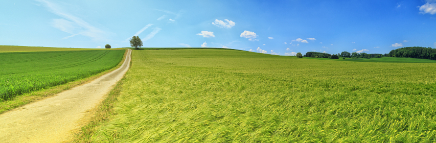 green,  farm,  field,  widescreen,  wallpaper,  blue sky,  grass,  summer,  still,  hd,  yellow,  path,  road
