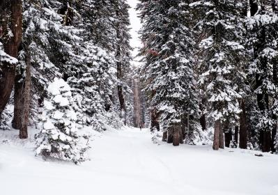 trees, plants, nature, snow, winter, cold, weather