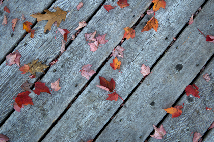 fall,  leaves,  wood,  boards,  woodgrain,  foliage,  autumn,  nature,  outdoors,  texture,  pattern