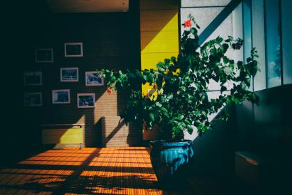 architecture, building, indoor, interior, plants, house, living room, shadow, sunlight